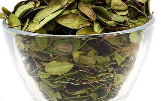 Использование брусники — ягод, листьев при беременности: лечебные свойства, особенности употребления, отзывы