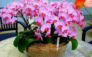 Чем можно удобрять орхидею в домашних условиях: лучшие подкормки, основные правила внесения удобрений