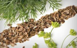 Семена укропа: лечебные свойства и противопоказания, особенности применения, фото