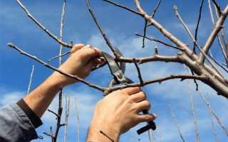 Обрезка вишни: как правильно обрезать в домашних условиях, пошаговая инструкция для начинающих