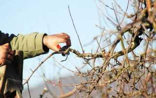 Как правильно обрезать яблоню весной: пошаговая инструкция для начинающих, видео