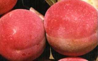 Слива Персиковая: описание сорта, посадка и уход, характеристика, фото