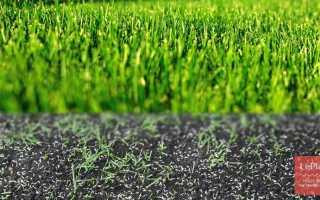 Когда лучше сеять газонную траву: весной или осенью, можно ли сажать летом, как сажать газон на даче