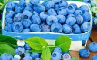 Голубика при сахарном диабете первого и второго типа, показания к применению, вред