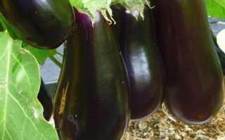 Баклажан Алмаз: описание и характеристика, урожайность и выращивание, фото