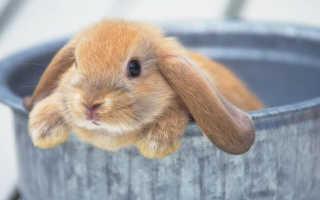 Можно ли мыть и сушить кроликов дома – рекомендации по уходу