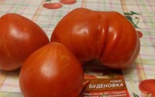 Томат Буденовка – описание и характеристика сорта с фото, отзывы