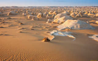 «Пустынный камень» титанопсис: 10 фактов о необычном суккуленте