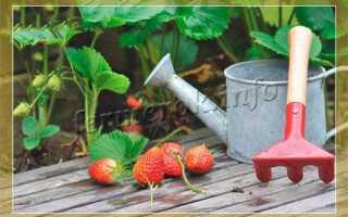 Подкормка клубники: особенности, чем и когда подкармливать, какие использовать удобрения, инструкция по удобрению