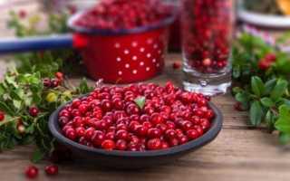 Брусника для похудения: отзывы, брусничный чай из листьев, как принимать, лист от целлюлита