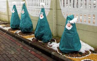 Подготовка туи к зиме и осенний уход за деревом: как подготовить растение к зимовке на улице в