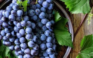 Сорт винограда Атос: описание и фото