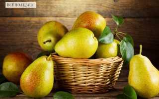 Груша Конференция: польза и вред, нормы употребления, состав и калорийность