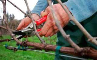 Правильная обрезка винограда осенью для новичков, схема с фото
