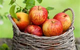 Мороженые яблоки: польза и вред, состав и калорийность, правила употребления