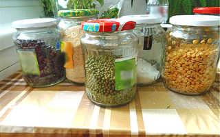 Фасоль в домашних условиях: как прорастить и как хранить, особенности ухода