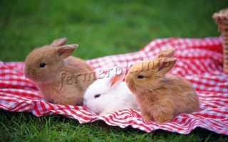 Сколько лет живут кролики разных видов и пород (домашние, обычные, карликовые, дикие), средние показатели