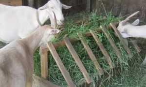 Кормушка для коз под сено своими руками: чертежи и фото