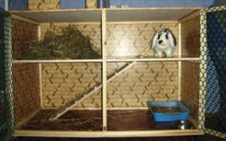Клетка для декоративного кролика: как сделать и обустроить своими руками, расчет размеров, сколько живут в клетке, почему