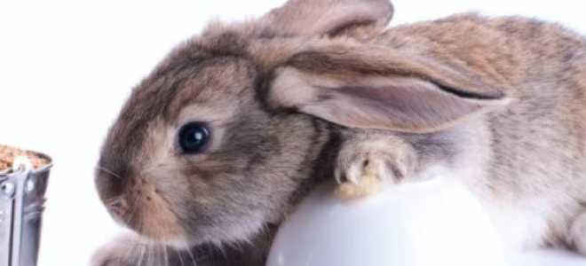 Каким зерном лучше кормить кроликов, можно ли давать зёрна ушастым