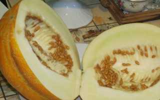 Дыня Эфиопка: описание, фото, выращивание из семян, полезные свойства, отзывы