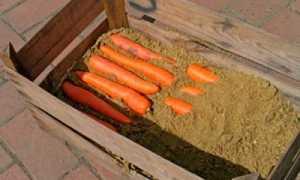 Почему гниёт морковь в погребе: причины гниения, сроки хранения, варианты хранения
