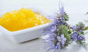 Мёд фацелии – полезные свойства и противопоказания, применение